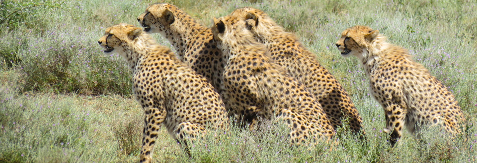 Women's Tour - Classic East Africa Safari - An Intimate Journey - Sept 21, 2017